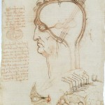 Leonardo da Vinci, The Ventricles of the brain and the layers of the scalp, c. 1490-94, pen and brown ink, red chalk, on paper, 203 x 152 mm., Windsor, Royal Collection